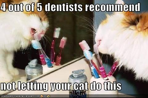 dentist cat toothbrush